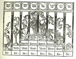 Hiérarchie des règnes de la nature selon Charles de Bovelles, inspiré par Nicolas de Cues